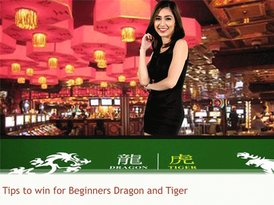 Best #4 Survival Tips To Win For Beginners Dragon Tiger